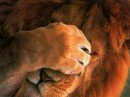 Lion of Judah beholding the timid